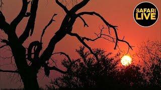 safariLIVE - Sunset Safari - May 21, 2019