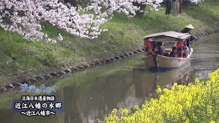 淡海をあるく 近江八幡の水郷 近江八幡市