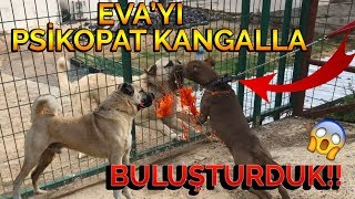 EVA'YI PSİKOPAT KANGALLA BULUŞTURDUK!! - ANLAŞAMADILAR!! 😱