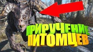Fallout 76: КАК ПРИРУЧИТЬ ПИТОМЦА, НАВЫК, БОЕВОЙ ПИТОМЕЦ, ГАЙД