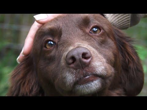 Animal não é brinquedo: o que você precisa saber antes de adotar um pet