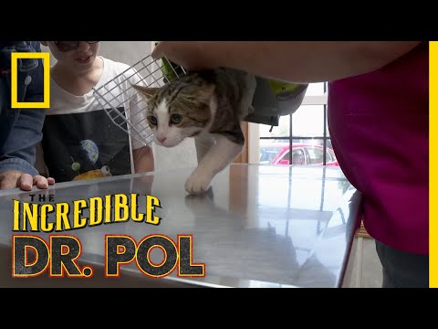 A Meow-tain of Cases | The Incredible Dr. Pol