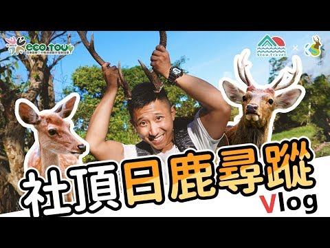 社區生態旅遊系列#03 | 社頂日鹿尋蹤