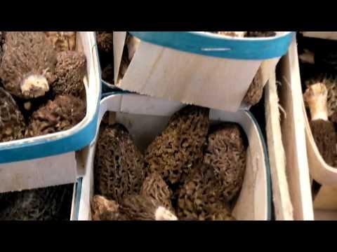 I biopag-d fermano listruzione di fungo per applicazione
