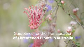 Guidelines for the Translocation of Threatened Plants in Australia