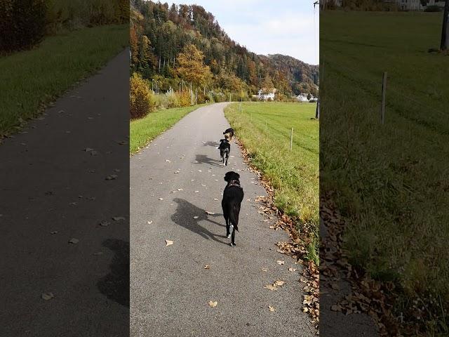 Tageshunde laufen fast in Einerreihe