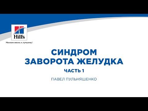 """Вебинар Hill's """"Синдром заворота желудка у МДЖ. Часть 1""""."""
