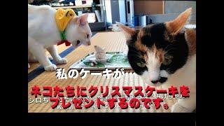 【保護猫】ネコ達にクリスマスケーキをプレゼントするのです。Christmas Gifts For Cats.