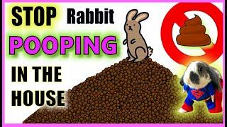 How do I stop my rabbit pooping everywhere?   Rabbit Litter Training