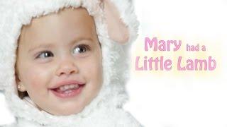 Mary Had a Little Lamb | Baby Songs | Nursery Rhyme | Kid Friendly