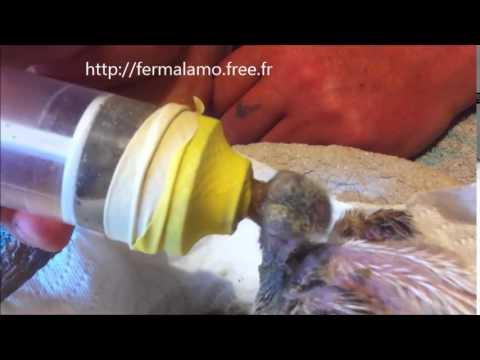 Comment obtenir une pompe à insuline