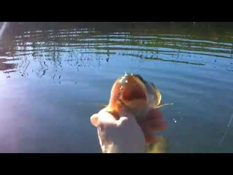 Bass on the Underspin – Kayak Pond Fishing with Alec