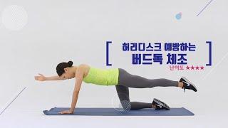 [전신운동] 허리디스크 예방하는 운동 버드독 스트레칭