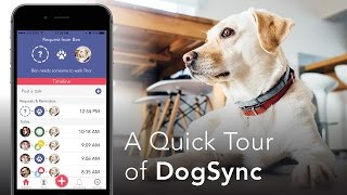DogSync