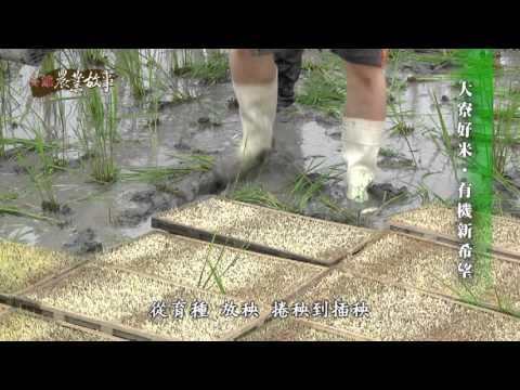 農業故事館-稻米
