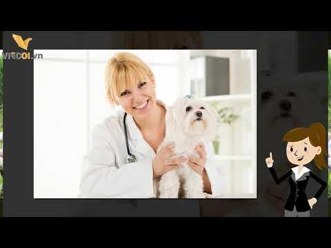 Những điều cần biết về nghề nghiệp và công việc của bác sĩ thú y (Nguồn Viecoi)