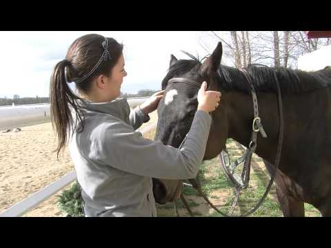 , title : 'How to Bridle a Horse
