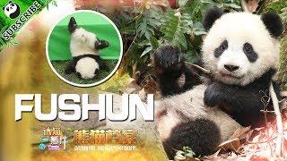 【Panda Scanning】Ep8 Do You Know How To Identify Fushun?   iPanda