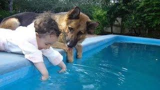 Impressed German Shepherd Dogs Who Desperately Protect Human Children