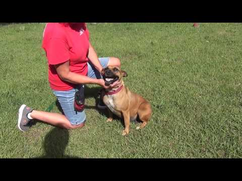 RIZZO, an adoptable Mixed Breed in Fernandina Beach, FL