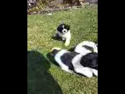 Puppy having fun vidoe