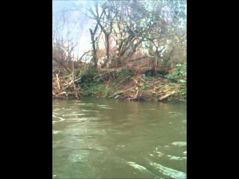 A Short Video of the Creeks Murky Waters