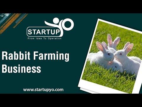 , title : 'Rabbit Farming Business - StartupYo | www.startupyo.com