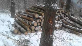 трелёвка по лесу, самодельный захват, видео 3, Гидрозахват своими руками, Трелёвка леса