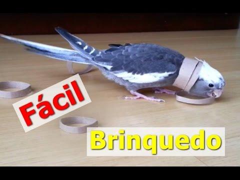 p/ aves: Calopsitas Argolas