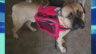 What To Do If a Service Dog Approaches You