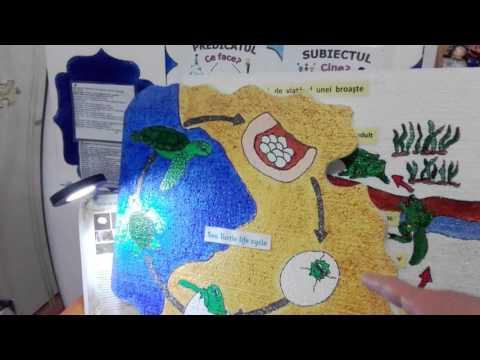 Human papillomavirus vaccines who position paper