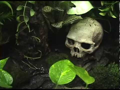 My Poison Dart Frog Terrarium Part 1 Exo Terra 36X18X18 Live Plants Arrow Frogs Real Habitat
