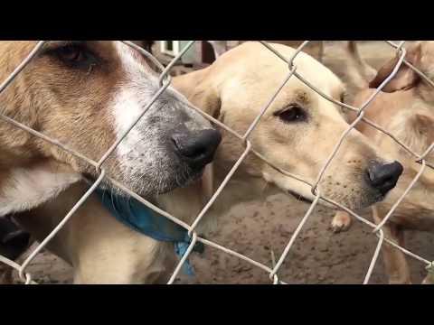 MD&SM1.5 Finalista Street Dog Models – Sony Mobile – Cóctel #LatamDigital V Premios