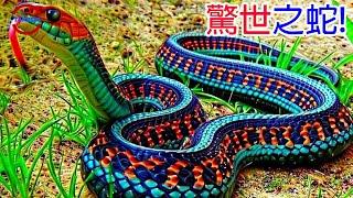 [TOP5]數個顛覆想像的詭異怪蛇   神似生殖器的生物   咬一口就必死無疑的毒蛇   不是突變形成的兩頭蛇