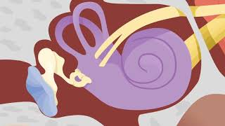 How the Ears Work - Nemours KidsHealth