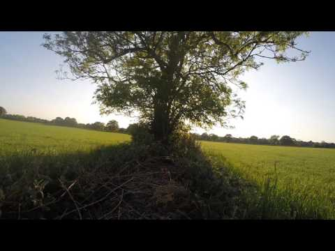 tree-of-doom---hornet-fpv-flying-wings