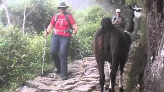 Inca Trail unexpected Llamas May 2013