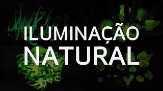 Como fungos usam química para brilhar no escuro da mata
