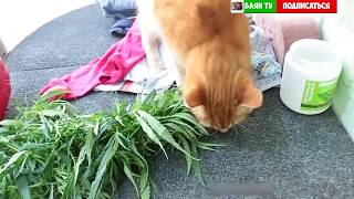 коты атакуют/cats are attacking