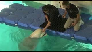 Philippe Jaroussky - El contatenor y la beluga en L'Oceanogràfic