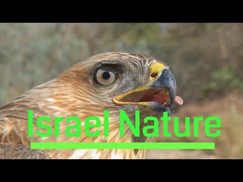 חיי הבר של ישראל - היופי בהתגלמותו!