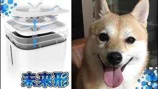 機能が凄すぎる!?超ハイテク!!犬猫用浄水機能付き給水機!!