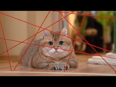 Missão Impossível em versão felina