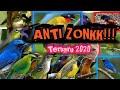 Download Lagu Suara pikat burung bandel yang susah mendekat/turun anti zonk  terbaru 2020 Mp3 Free