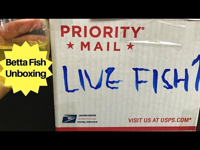 UNBOXING MY $200 BETTA FISH