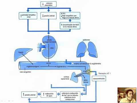 Beneficios de apio y los daños para la hipertensión y