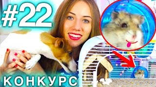 СОБАКА И ХОМЯЧОК ДРУЗЬЯ? КОНКУРС #22 ДЛЯ ДОМАШНИХ ЖИВОТНЫХ | Elli Di Pets