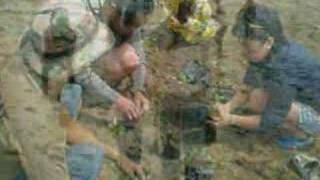 DYAB Cebu: Kapamilya Mangrove Planting