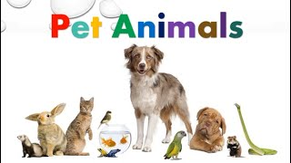 Pet Animals | Learning Video For Kids | AuSum Sisters