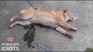 Смотреть онлайн Подборка: Самые жестокие фейлы с животными
